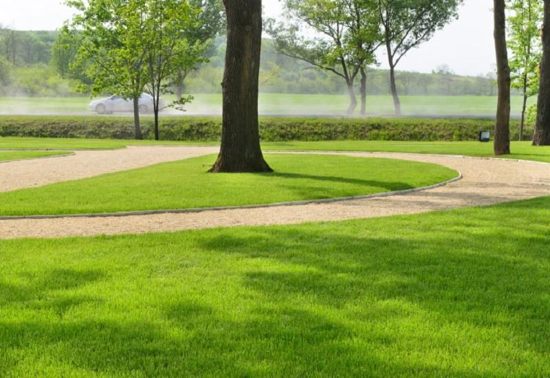 Best Grass Seed For Sandy Soil