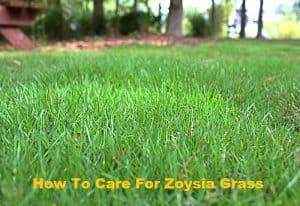 How To Care For Zoysia Grass