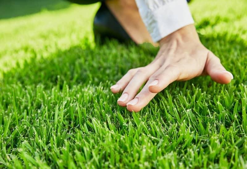 How To Maintain Zoysia Grass
