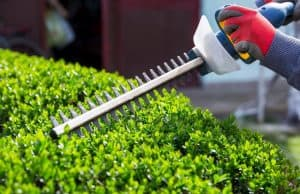 How To Trim Bushes With An Electric Trimmer