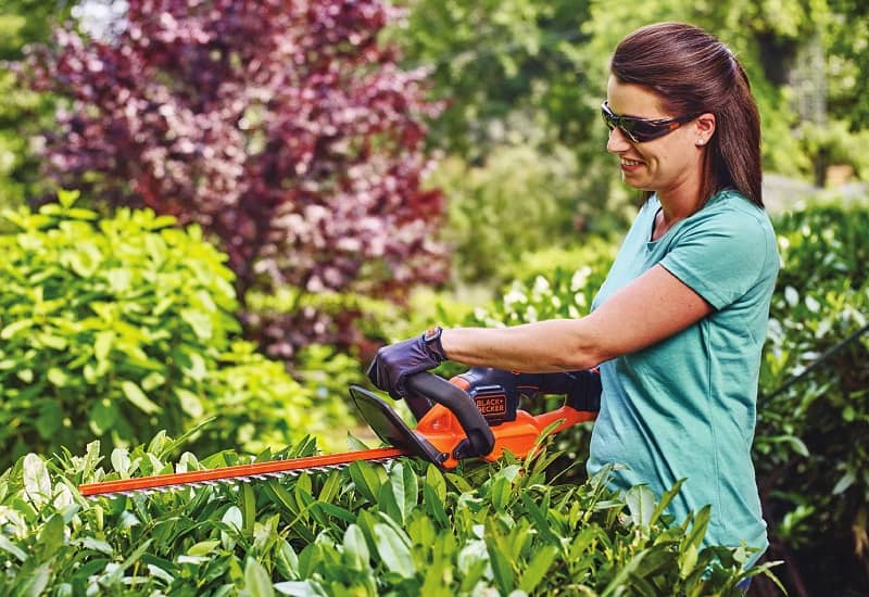 How To Trim Holly Bushes With The Hedge Trimmer