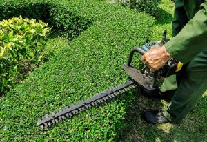How To Use Electric Hedge Trimmer