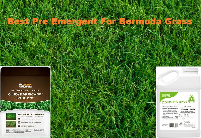 Best Pre Emergent For Bermuda Grass