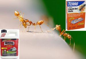 Best Sugar Ant Killer