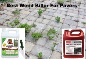Best Weed Killer For Pavers