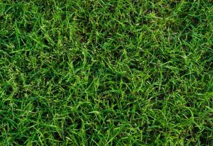 How To Keep Weeds Out Of Bermuda Grass