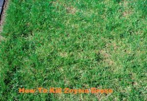 How To Kill Zoysia Grass