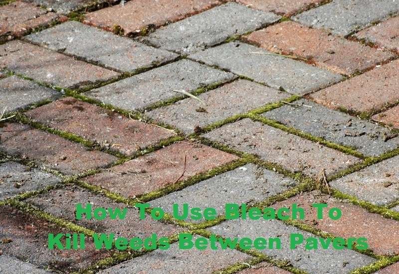 How To Use Bleach To Kill Weeds Between Pavers