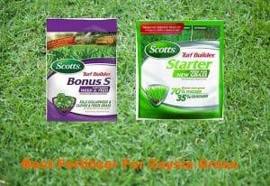 best fertilizer for zoysia grass