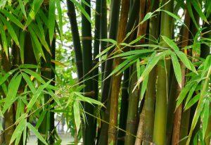 5 Plants That Looks Like Bamboo