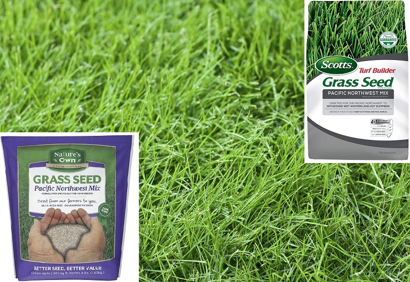 Best Grass Seed For PNW (Pacific Northwest)