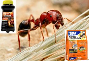 Best Red Ant Killer
