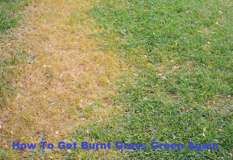 How To Get Burnt Grass Green Again