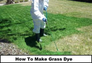 How To Make Grass Dye