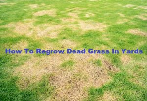How To Regrow Dead Grass In Yards