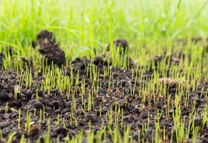 How To Speed Up Grass Seed Germination