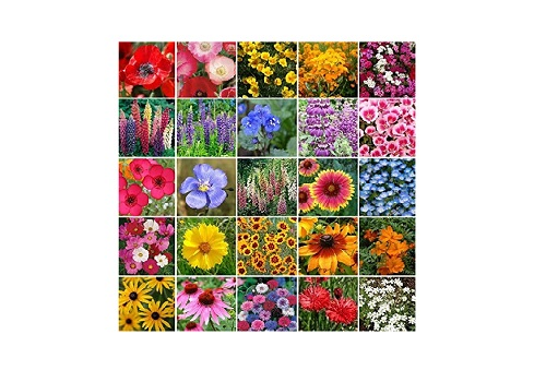 Pacific Northwest Wildflower Seed Mix- 1 to 4 Pound