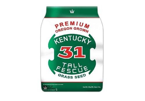 Premium Oregon Grown Kentucky 31 Tall Fescue Grass Seed