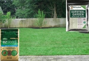 Best Grass Seed For Long Island