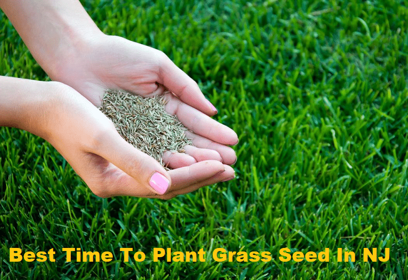 Best Time To Plant Grass Seed In NJ
