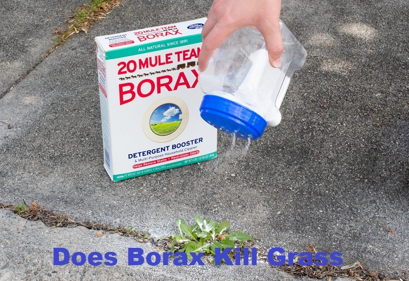 Does Borax Kill Grass
