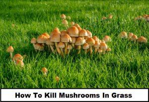How To Kill Mushrooms In Grass